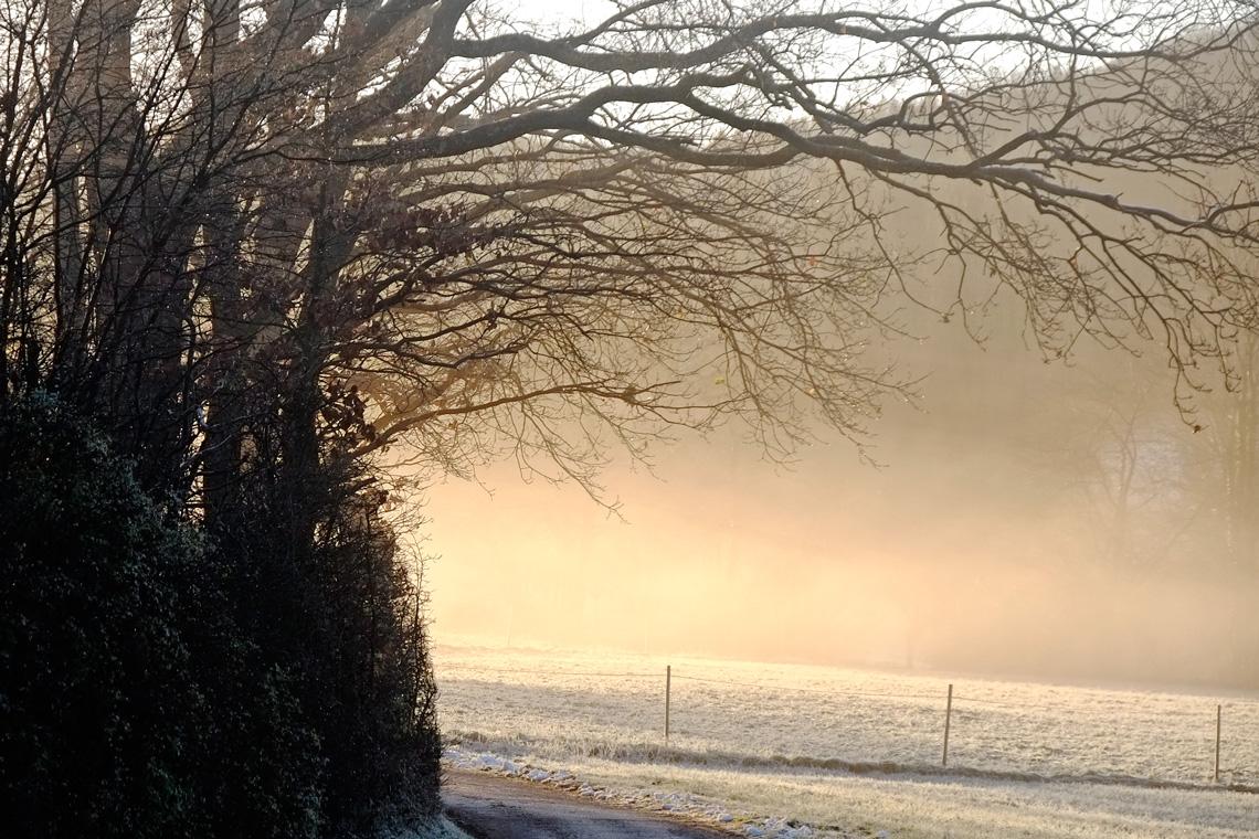 Morgenstimmung mit Winterbaum