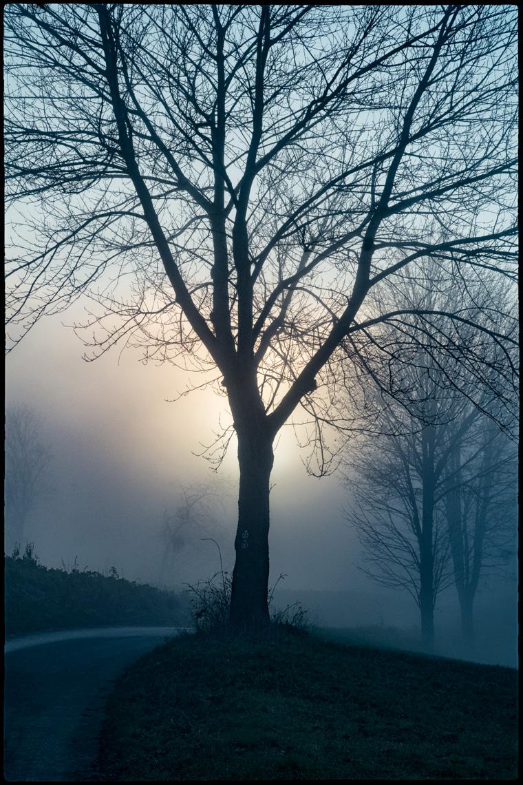 Winterlicher Nebel an der Bergstraße