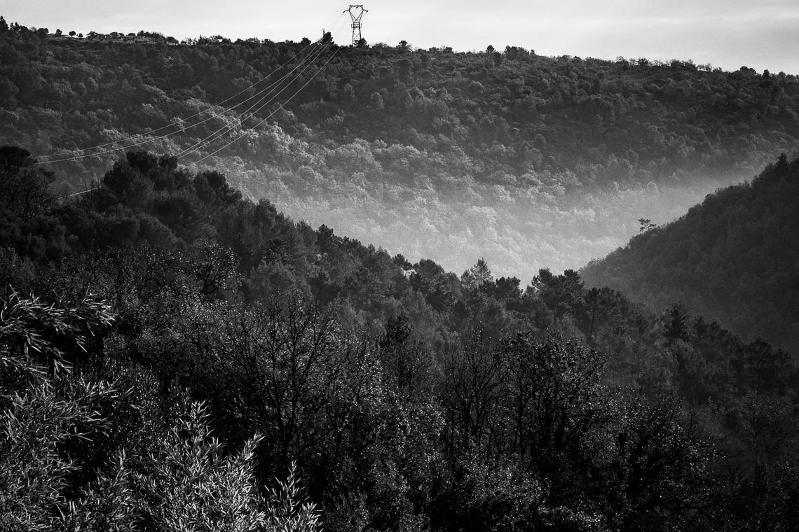 Strommast über dem Wald schwarzweiß