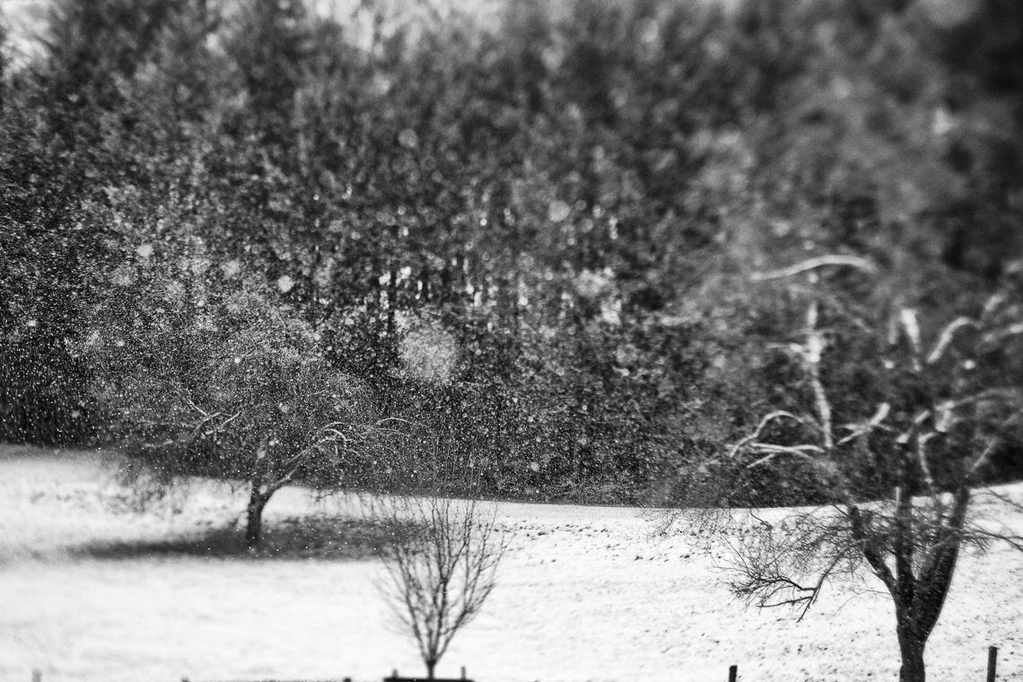 Schneegestäub