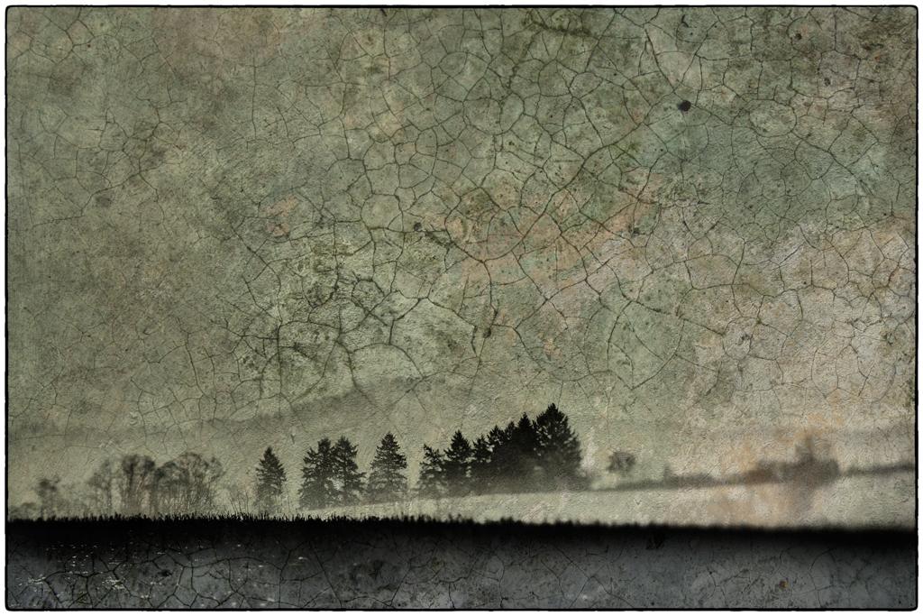 Wald mit Struktur