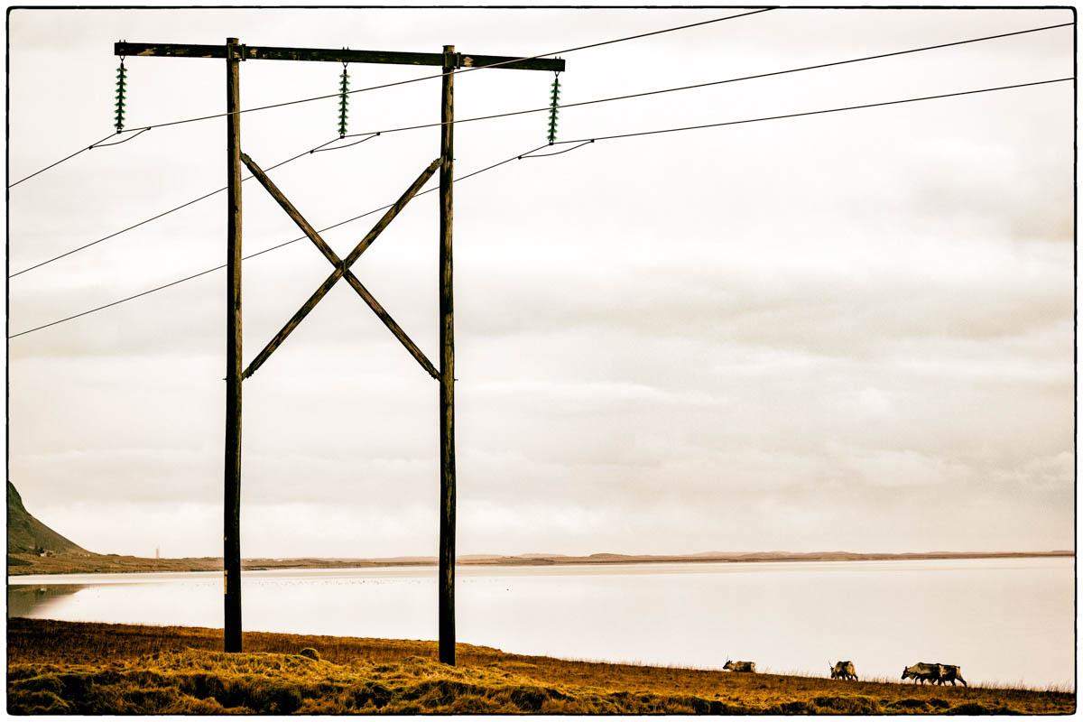 Strommast an der isländischen Küste - diesmal mit Rentieren